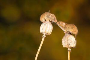 Read more about the article Was ist achtsame Kommunikation in der Partnerschaft? Was verstehe ich unter achtsamer  Beziehungskultur?